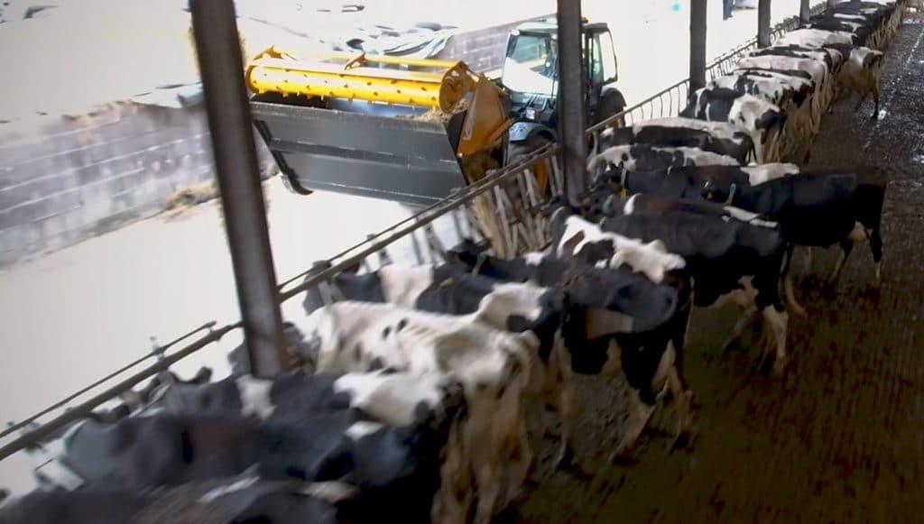 Godet à vis en alimentation d'élevage au travail